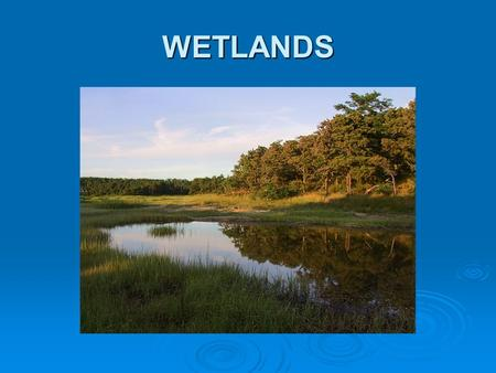 WETLANDS Wetlands Definitions   Wetlands are lands where saturation with water is the major factor determining the nature of soil development and the.