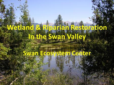 Wetland & Riparian Restoration In the Swan Valley Swan Ecosystem Center.