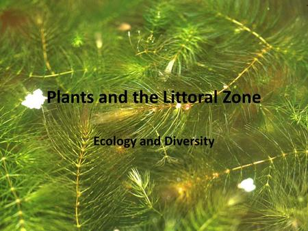 Plants and the Littoral Zone Ecology and Diversity.