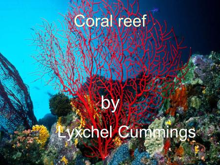 Coral reef by Lyxchel Cummings.  109 countries have Coral reefs. The Great Barrier Reef is the largest Coral formation in the planet, it is located in.