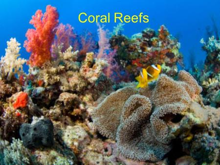 Coral Reefs. Coral Reef Formation Scleractinian Coral Polyps Scleractinia = stony, hard corals Coral polyps can be solitary or colonial –Solitary forms.