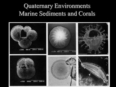 Quaternary Environments Marine Sediments and Corals.