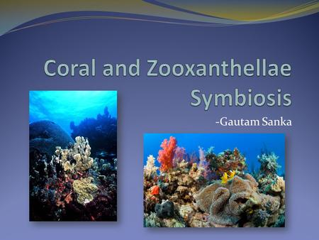 -Gautam Sanka. What is a Coral? Coral is an animal in the phylum Cnidaria and class Anthozoa Coral exists in the ocean as polyps which are a form of life.