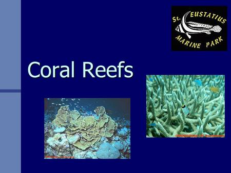 Coral Reefs. What is Coral? GIANT STRUCTURES built by tiny creatures GIANT STRUCTURES built by tiny creatures Some reef systems are so huge that they.