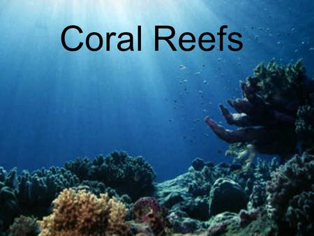 Coral Reefs. Facts about Coral Reefs Largest living thing on Earth Covers less than 1% of the Earth's Surface Needs sunlight to grow.