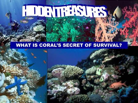 WHAT IS CORAL'S SECRET OF SURVIVAL? AROUND THE WORLD, IN WARM AND SHALLOW WATERS, CORAL REEFS ARE A DAZZLING DIVERSITY OF LIFE.