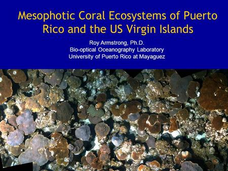 Mesophotic Coral Ecosystems of Puerto Rico and the US Virgin Islands Roy Armstrong, Ph.D. Bio-optical Oceanography Laboratory University of Puerto Rico.