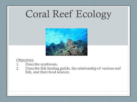 Coral Reef Ecology Objectives: 1.Describe symbiosis. 2.Describe fish feeding guilds, the relationship of various reef fish, and their food sources.