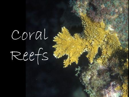 "Coral Reefs. ""Coral"" is general term for several different types of cnidarians (phylum Cnidaria) that produce calcium carbonate skeletons (CaCO 3, a.k.a."