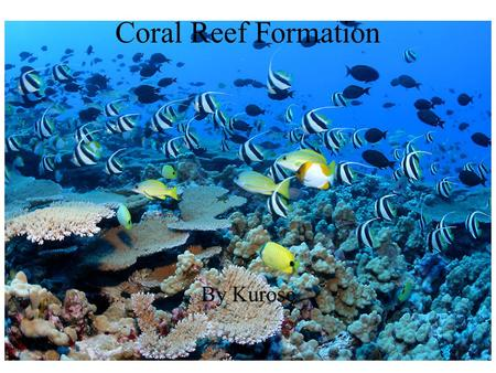 By Kurose Coral Reef Formation. Coral reefs are called the forest of the sea. Why are coral reefs and forests so important? Fish, invertebrates (animals.