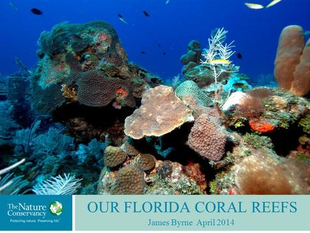 OUR FLORIDA CORAL REEFS James Byrne April 2014. Spans over 300 nautical miles from the Dry Tortugas to Stuart. The only tropical coral reef system, and.