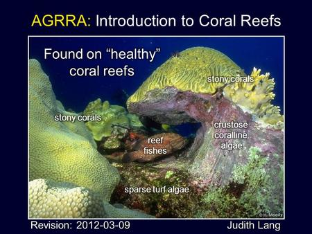 AGRRA: Introduction to Coral Reefs Revision: 2012-03-09 Judith Lang.