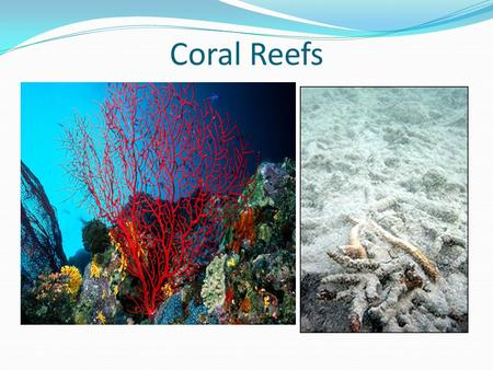 Coral Reefs. What are Coral Reefs? Coral reefs are warm, clear, shallow ocean habitats that are rich in life. The reef's massive structure is formed from.
