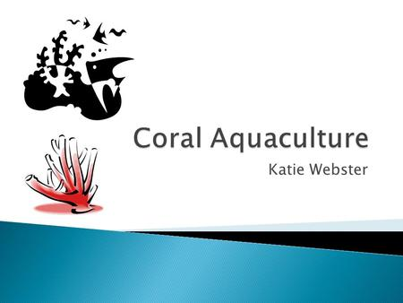 Katie Webster.  Phylum Cnidaria  Colonial growth  Foundation species.