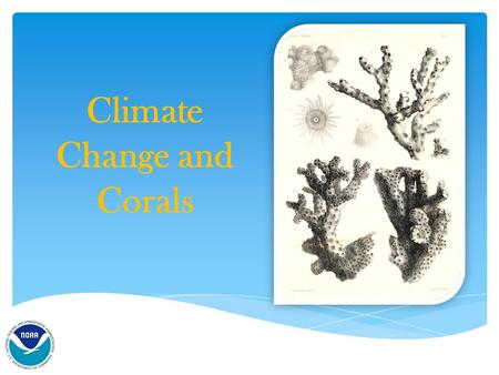 Climate Change and Corals.  Are they plants?  Are they animals?  Are they rocks? What are Corals?