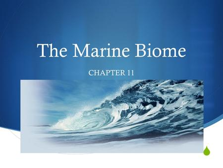  The Marine Biome CHAPTER 11. THE WORLD OCEAN  OCEANIC ZONE – Open ocean  Largest zone in the ocean – 90% of surface area  Very deep – 500 m to 11,000.