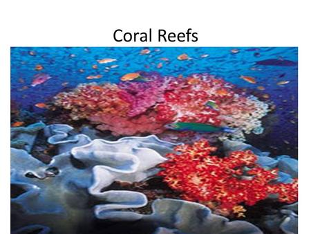 Coral Reefs. Warm shallow,tropical waters Limestone ridges built by tiny coral animals, coral polyps with the algae that live inside.