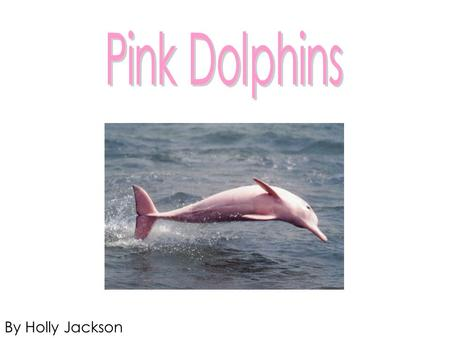 By Holly Jackson. Pink Dolphin Facts Pink Dolphins in Hong Kong are also known as the Chinese White Dolphin Most Pink Dolphins live up to about 40 years.