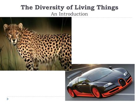 The Diversity of Living Things An Introduction. Why Classify?  Scientists have determined that the Earth has 8.7 million species of living things. 