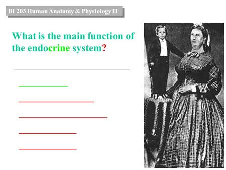 What is the main function of the endocrine system? _______________________ ___________ _________________ ____________________ _____________ BI 203 Human.