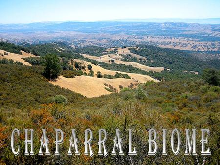 What is a Chaparral? A chaparral is a shrubby coastal area that has hot dry summers and mild, cool, rainy winters. The word chaparral comes from chaparro,