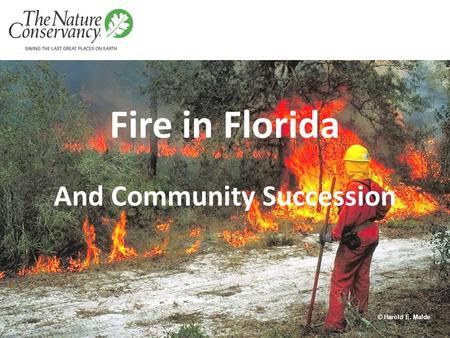 Fire in Florida And Community Succession © Harold E. Malde.