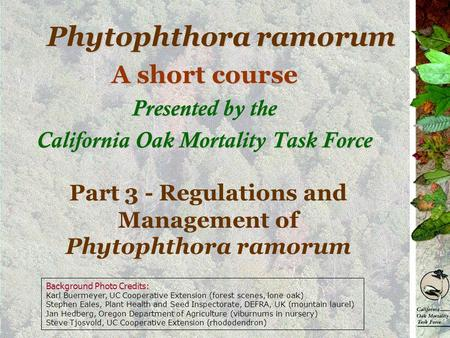 Phytophthora ramorum A short course Presented by the California Oak Mortality Task Force Part 3 - Regulations and Management of Phytophthora ramorum Background.