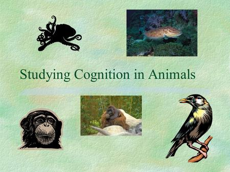 Studying Cognition in Animals. Cognition §Cognition: study of the internal states and processes that produce behavior. §Consciousness: something else.