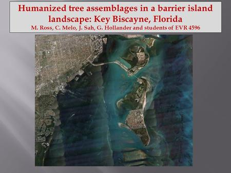 Humanized tree assemblages in a barrier island landscape: Key Biscayne, Florida M. Ross, C. Melo, J. Sah, G. Hollander and students of EVR 4596.