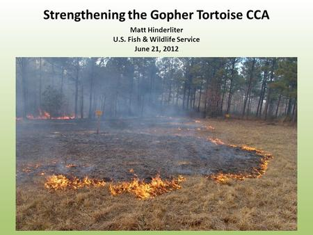 Strengthening the Gopher Tortoise CCA Matt Hinderliter U.S. Fish & Wildlife Service June 21, 2012.