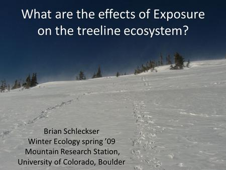 What are the effects of Exposure on the treeline ecosystem? Brian Schleckser Winter Ecology spring '09 Mountain Research Station, University of Colorado,