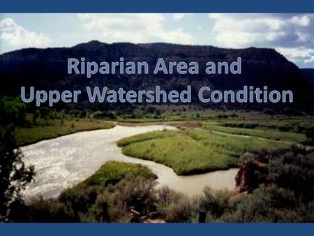 Relationship to E-Flows Riparian Areas Influences groundwater/surface water relationships Provides filters to improve water quality Provides habitat for.