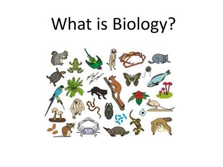 "What is Biology?. The study of Living Things What does this phrase represent? ""King Henry Died By Drinking Chocolate Milk"""
