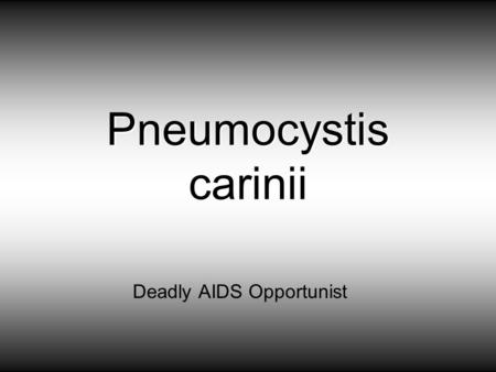 Pneumocystis carinii Deadly AIDS Opportunist. Pneumocystis carinii pneumonitis (PCP) is a common opportunistic disease that occurs almost exclusively.