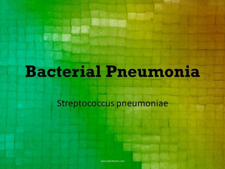 Bacterial Pneumonia Streptococcus pneumoniae. Streptococcus isn't a new bacteria. 1881 – first isolated and grown by Louis Pasteur, and then demonstrated.