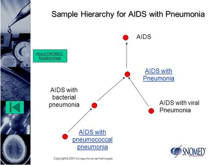 Copyright © 2001 College of American Pathologists Sample Hierarchy for AIDS with Pneumonia AIDS with bacterial pneumonia AIDS with viral Pneumonia About.