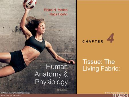 4 Tissue: The Living Fabric:.