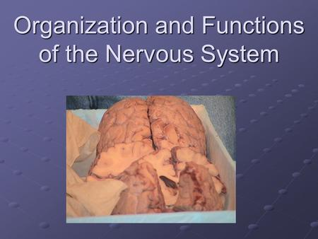 Organization and Functions of the Nervous System.
