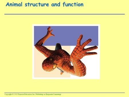 Copyright © 2005 Pearson Education, Inc. Publishing as Benjamin Cummings Animal structure and function.