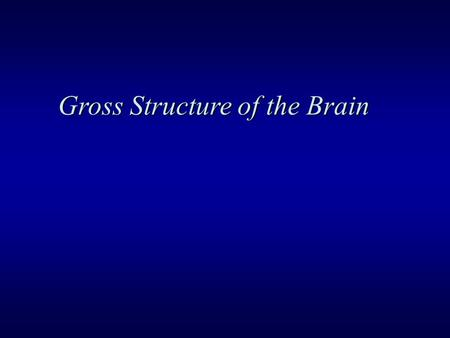 Gross Structure of the Brain. Nervous System  CNS (central nervous system) Brain Spinal Cord  PNS (peripheral nervous system) Peripheral Nerve Ganglion.