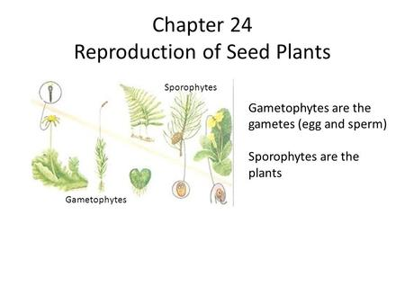 Chapter 24 Reproduction of Seed Plants
