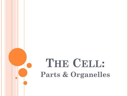 T HE C ELL : Parts & Organelles. O BJECTIVES To become familiar with the parts & organelles of a cell including: Cell Wall Cell Membrane Nucleus Nucleolus.
