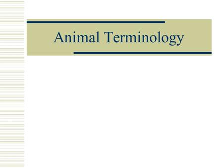 Animal Terminology. Cattle (Bovine) * Cow – female over 2 years of age * Heifer – female under 2 years of age * Bull – Mature (intact) male * Steer– castrated.