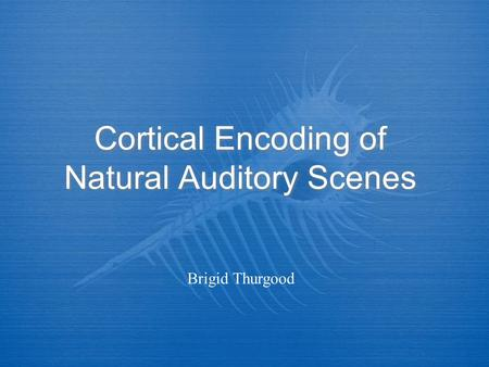 Cortical Encoding of Natural Auditory Scenes Brigid Thurgood.
