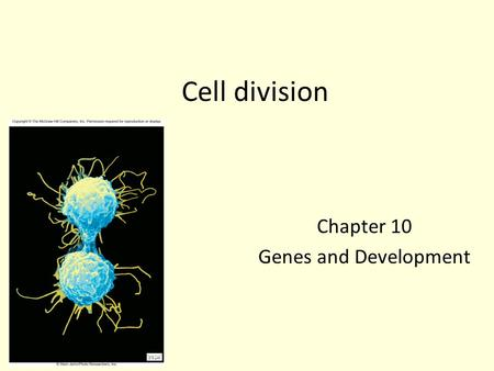 Cell division Chapter 10 Genes and Development. Fig. 10.1-1 Copyright © The McGraw-Hill Companies, Inc. Permission required for reproduction or display.