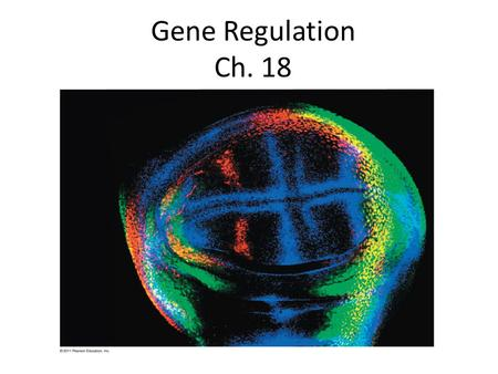 Gene Regulation Ch. 18. Precursor Feedback inhibition Enzyme 1 Enzyme 2 Enzyme 3 Tryptophan (a) (b) Regulation of enzyme activity Regulation of enzyme.