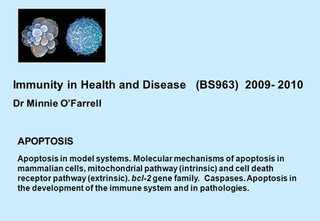 APOPTOSIS Immunity in Health and Disease (BS963) 2009- 2010 Dr Minnie O'Farrell Apoptosis in model systems. Molecular mechanisms of apoptosis in mammalian.