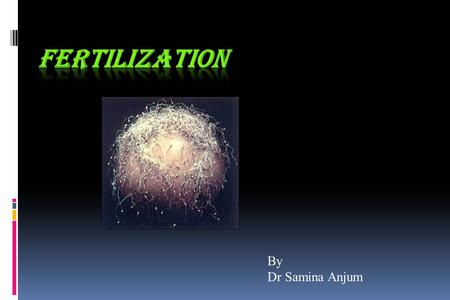 By Dr Samina Anjum. Fertilization is the process by which fusion of male and female gametes occurs in the ampullary region of the uterine tube.