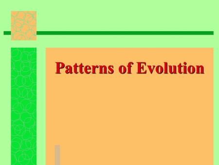 Patterns of Evolution. Macroevolution/Microevolution allele gene  Both involve changes in allele frequencies in gene pools same basic  Both work through.