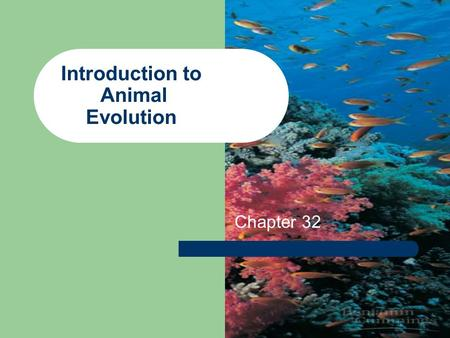 "Introduction to Animal Evolution Chapter 32. Origins All phyla form rather quickly in the ""Precambrian explosion"" Before 500 MYA Common ancestry with."